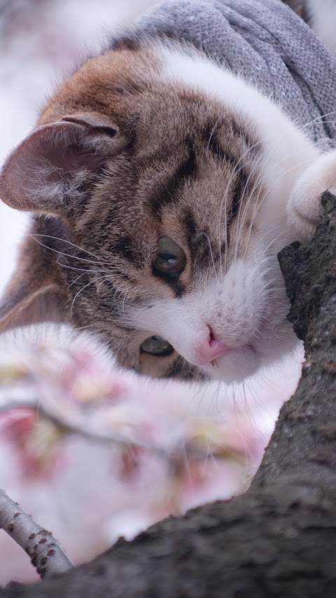 Boss Mèo Leo Cây