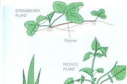 Mengenal Perbedaan Reproduksi Vegetatif dan Generatif