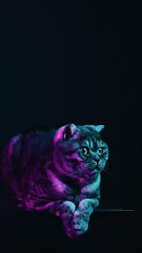 Chú Mèo Xám Đặc Biệt