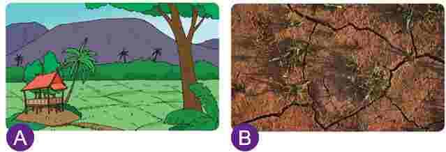 Lingkungan subur dan Gersang