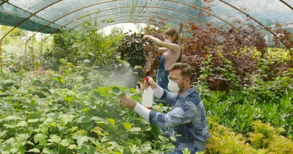 How to Fertilize Greenhouse Plants
