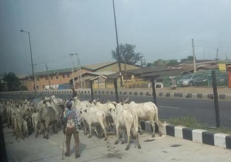 cows brt lane ikorodu lagos