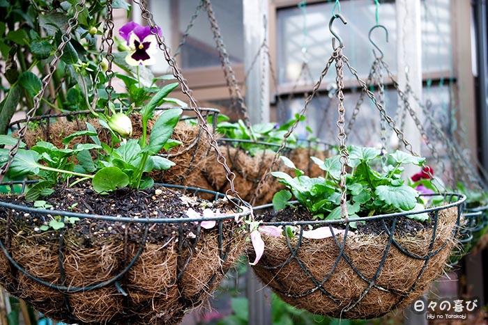 suspensions avec plantes (détails)