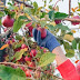 Over 10000 Fruit Farm Workers Needed In Canada