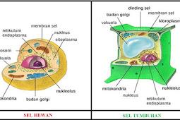 Bagian-Bagian Sel dan Fungsinya