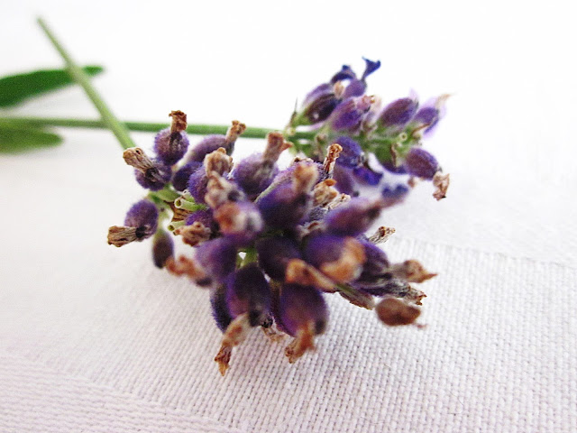 Lavendel Nahaufnahme