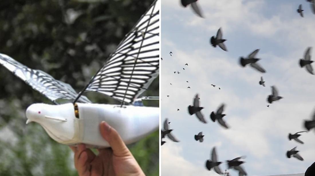 Drones em forma de pomba robóticos estão agora espionando pessoas