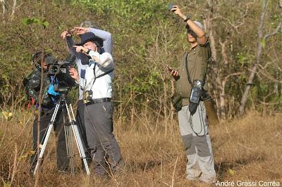 Cantão, Ilha do Bananal, Globo Repórter, Tocantins, belezas naturais, natureza, conservação, unidade de conservação, Aves, tv anhanguera, birding, Pica-pau-do-parnaiba