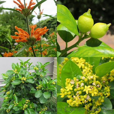Citrus colours for November