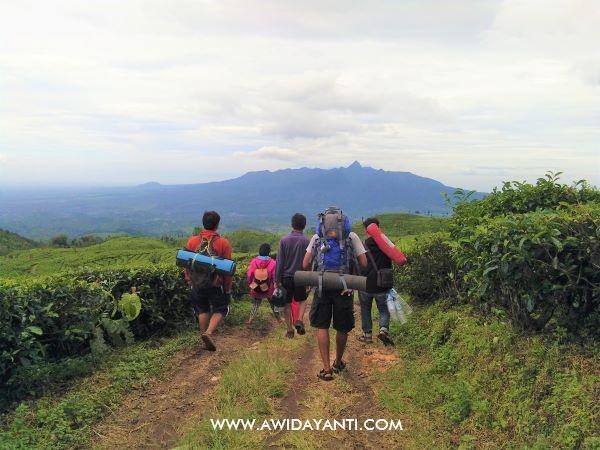 Perkebunan Teh Sirah Kencong view Gunung Kelud