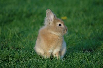 Kelinci yang sedang bermain
