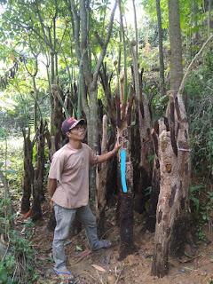 jual tanaman pakis hutan harga murah terdekat di jakarta