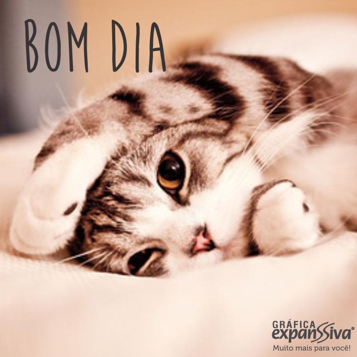 50 lindas mensagens de bom dia com gatinho - 50 lindas mensagens de bom dia