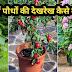 गमले में पौधों की देखरेख कैसे करें