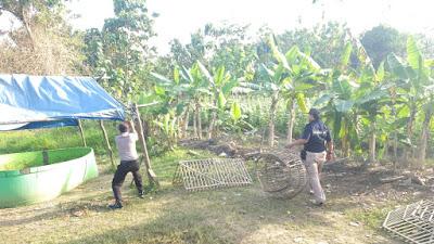 Polisi Beraksi Robohkan & Bakar Tempat Sabung Ayam di Cilamaya Karawang
