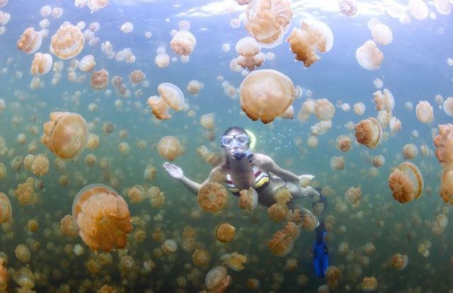 Hồ Kakaban phía nam của tỉnh Đông Kalimantan là nơi du khách có thể bơi cùng hàng triệu con sứa gồm 4 loài khác nhau. Chúng không hề nguy hiểm và đốt người.  Hồ Kakaban được hình thành từ nước mặn, bao quanh có các hòn đảo.     Trong tiếng địa phương của Indonesia, Kakaban cũng có nghĩa là ôm trọn. Điều kiện sống và môi trường khác biệt đã khiến các loài tiến hóa khác lạ. Những con sứa không có vòi đâm và một số con bơi ngửa hoặc không có xúc tu. Thêm vào đó một phần của hòn đảo được bao bọc bởi rừng ngập mặn tạo nên có cảnh sắc thiên nhiên đầy màu sắc.