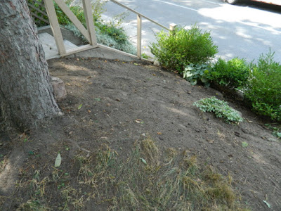 Koreatown Toronto Summer Front Garden Cleanup After by Paul Jung Gardening Services--a Toronto Organic Gardener