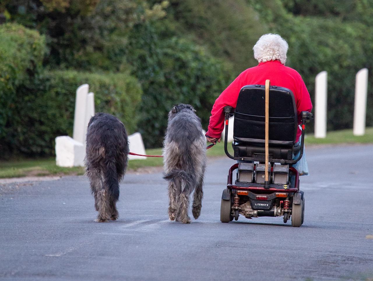 Meilleures races de chiens pour les personnes âgées