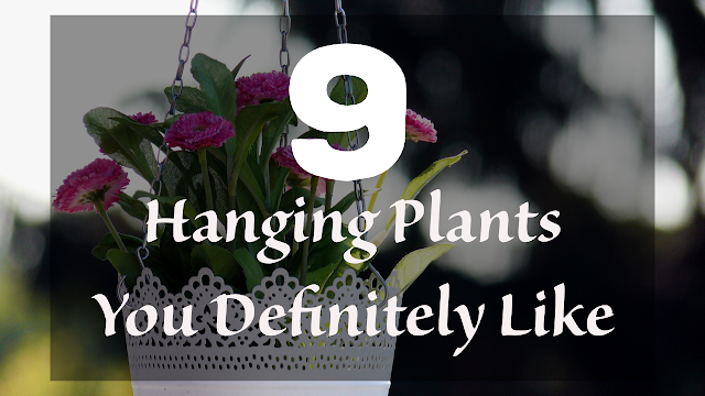 Hanging plants for home indoor decor