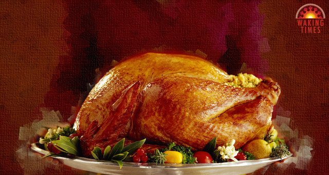 The hard to swallow truth about turkey day short for Why do we eat turkey on thanksgiving
