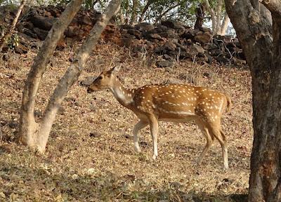 Shoolpaneshwar National Park