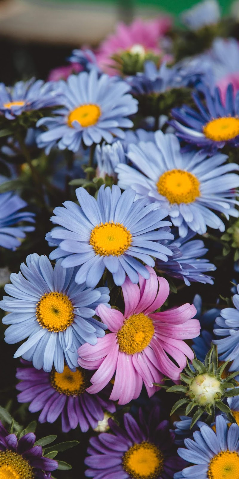 Sắc màu của hoa