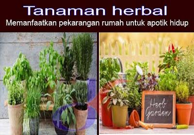 Tanaman herbal - Memanfaatkan pekarangan rumah untuk apotik hidup