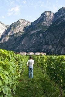 Campo Rotaliano wines of Elisabetta Foradori