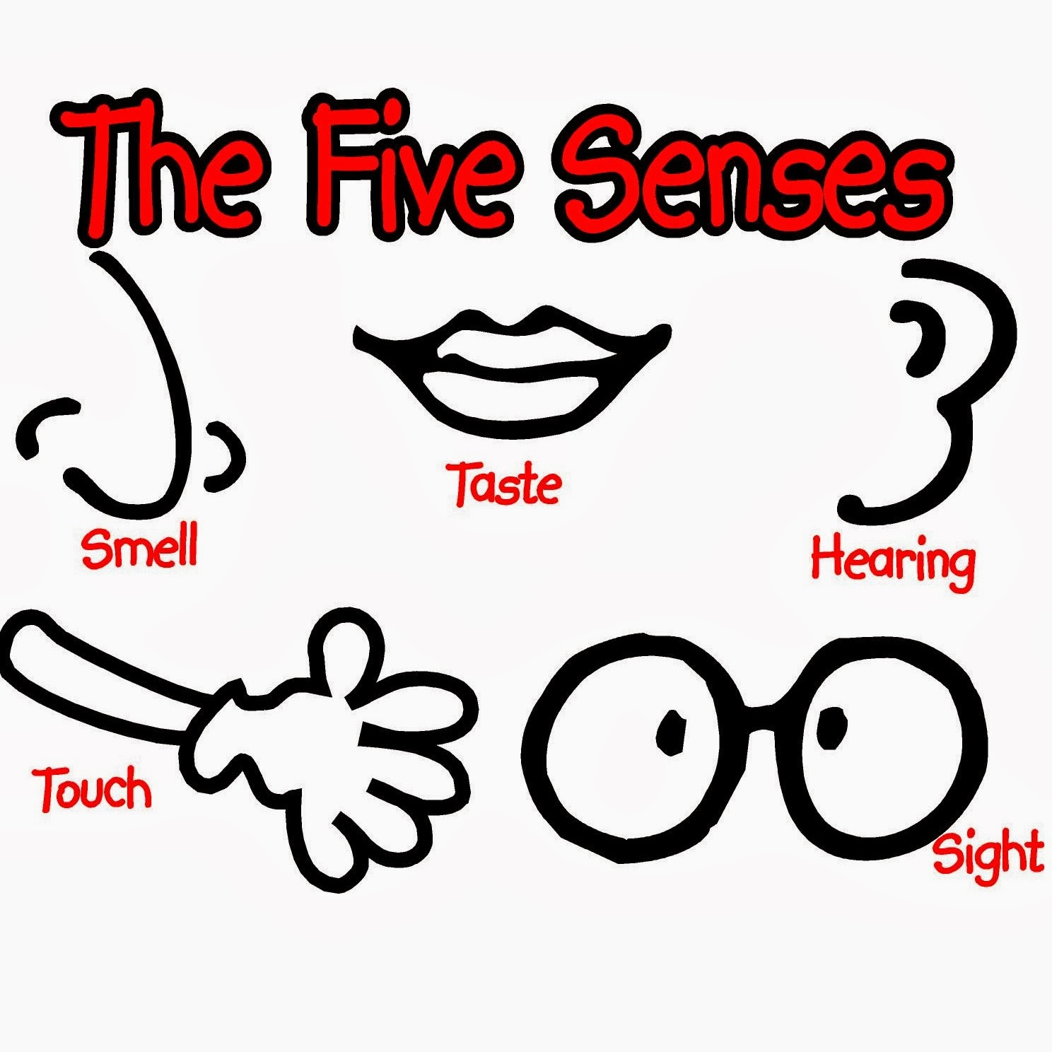 The Five Senses Los Cinco Sentidos