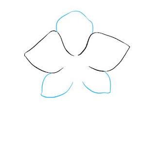 تعليم الرسم للاطفال بالصور رسم زهرة الأوركيد