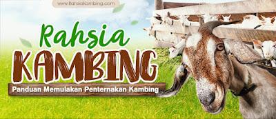 bisnes ternak kambing