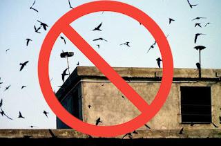Không được dùng loa phóng phát âm thanh bên ngoài nhà yến.