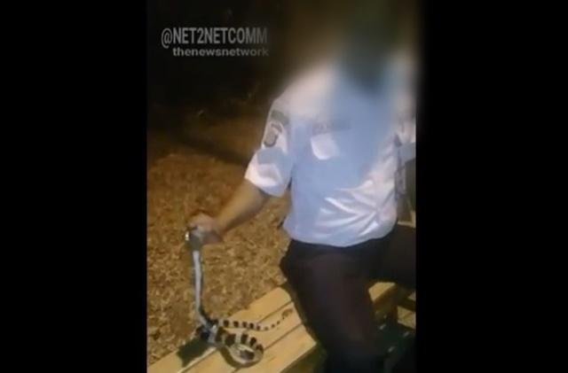 Ular Weling Yang Membunuh Satpam Iskandar di Gading Serpong - IGnet2netcomm
