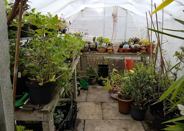 The big greenhouse, wrapped and filling up