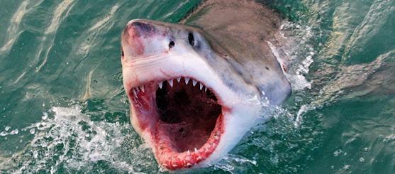 Λευκός καρχαρίας ορμάει σε εξωλέμβια μηχανή βάρκας και σκορπάει τον τρόμο (βίντεο)