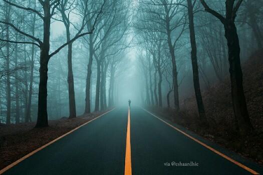 Hutan Fotografi Walk Alone