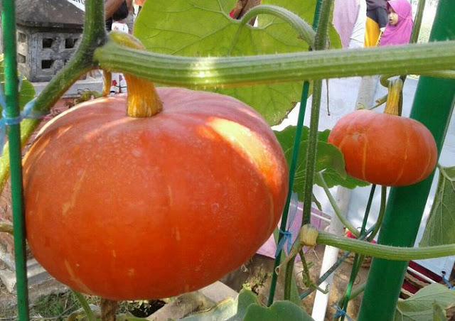 Soropadan Agro Expo 2019