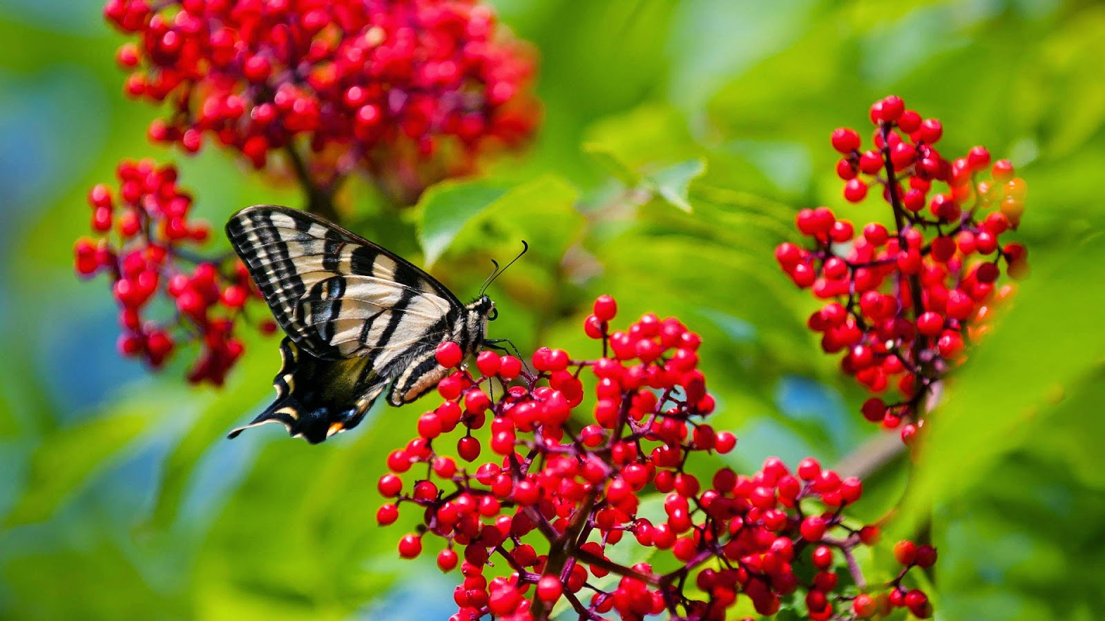 Beautiful Wallpaper Download For High Definition Nature Spring Season Fresh New HD Desktop Background Butterfly Widescreen