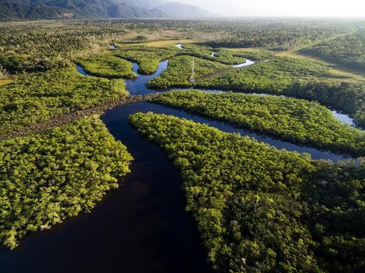 GOVERNO BOLSONARO DESTINARÁ R$500 MILHÕES PARA PROTEGER A AMAZÔNIA