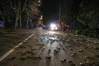 Terror en Europa por miles de pájaros muertos-PuroIngenio