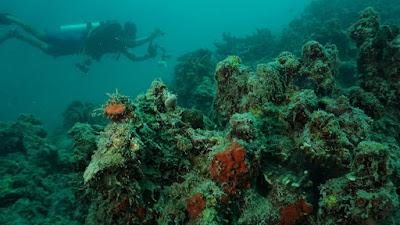 peduli lingkungan dengan jaga terumbu karang