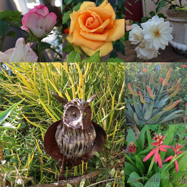 Garden flowers in May