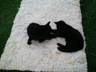 tapete lã de ovelha feltrado com gatos em cima