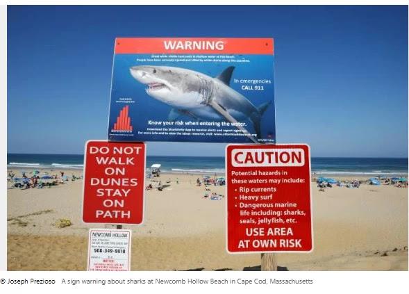 Great white shark kills girl off US coast A  girl once killed