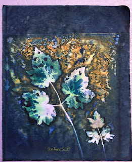 Wet cyanotype, Sue Reno, Image 33