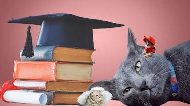 ¿Cómo educar a nuestro gato en 8 sencillos pasos?
