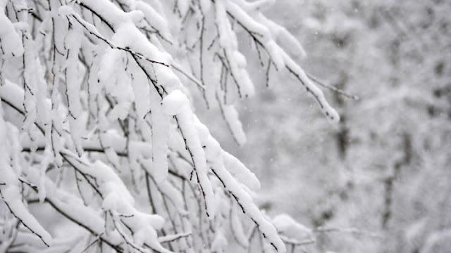 """Η """"πρωτιά"""" της παγωνιάς: Στους -25 η θερμοκρασία στο Νέο Καύκασο Φλώρινας"""