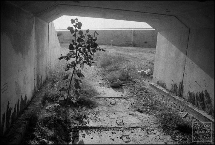 fotografía,naturaleza,Fuente_Álamo,murcia,contraluz