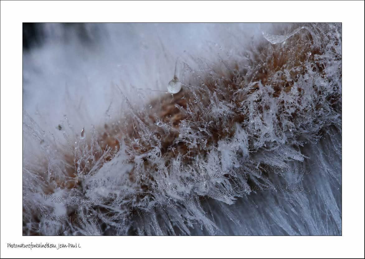 fontainebleau foret barbe de glace bois mort