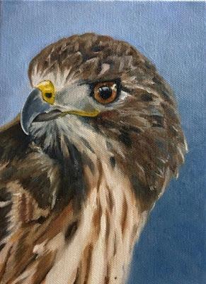 `Io - Hawaiian Hawk